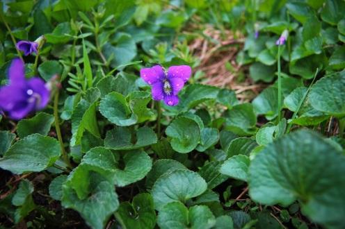 violetpizza19